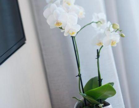 Heart-Hotel-Whitsundays-Accommodation-2